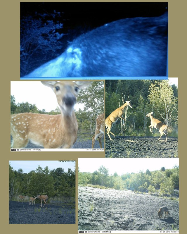 A couple member trail cam pics